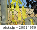 沖縄 名護市辺野古の国境フェンス キャンプシュワブ【2017年4月撮影】 29914959