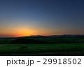 美瑛 キタキツネ 北海道の写真 29918502