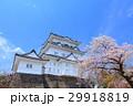 小田原城 天守閣 桜の写真 29918819