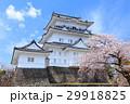 小田原城 天守閣 桜の写真 29918825