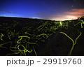 ホタル 光 ゲンジボタルの写真 29919760