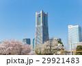 横浜 みなとみらい 桜の写真 29921483