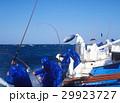 カツオ一本釣り漁  太平洋 29923727