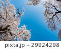 桜 花 空の写真 29924298