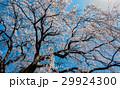 桜 花 空の写真 29924300