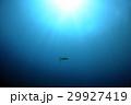 ウミガメ 29927419