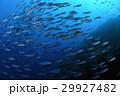 小魚の群れ 29927482