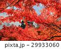 紅葉 モミジ 香嵐渓の写真 29933060
