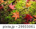 紅葉 モミジ 香嵐渓の写真 29933061