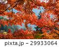 紅葉 モミジ 香嵐渓の写真 29933064