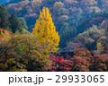 紅葉 香嵐渓 山の写真 29933065