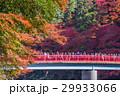 紅葉 香嵐渓 秋色の写真 29933066