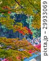 紅葉 香嵐渓 秋色の写真 29933069