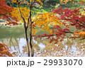 紅葉 香嵐渓 秋色の写真 29933070