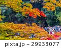 紅葉 香嵐渓 秋色の写真 29933077
