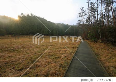 徳島県三好市 黒沢湿原 29933761