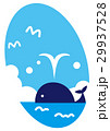 鯨 潮吹き 動物のイラスト 29937528