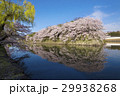 満開の彦根城中堀の桜 29938268