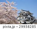 彦根城 城 桜の写真 29938285