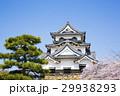 桜咲く春の彦根城 29938293