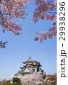 桜咲く春の彦根城 29938296
