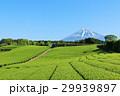 青空の富士山と新緑の茶畑 29939897