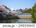 満開の彦根城中堀の桜 29939945