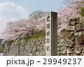 桜の姫路城の石碑 29949237
