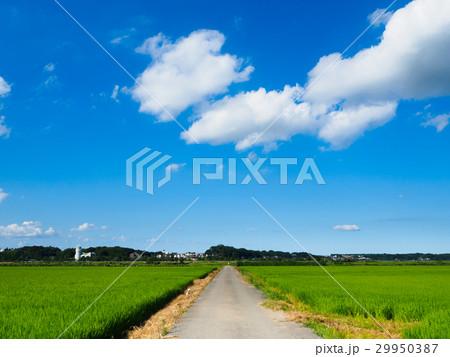 夏の水田に伸びる一本道 29950387