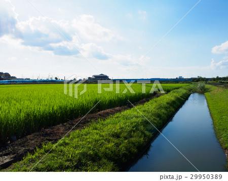 水田と用水路 29950389
