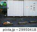 猫の餌付け禁止 29950418