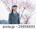 女の子 入学 新入生の写真 29956693