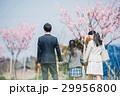 桜並木を歩く家族 後ろ姿 29956800
