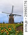 風車とひまわり畑 29960776