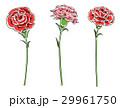 カーネーション 花 ベクターのイラスト 29961750