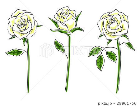 白いバラのセットシンプルのイラスト素材 29961756 Pixta
