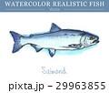 水彩画 透明水彩 ベクトルのイラスト 29963855