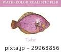 水彩画 透明水彩 ベクトルのイラスト 29963856