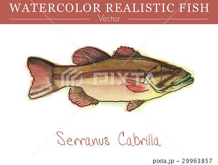 Hand painted watercolor edible fish. Vector design 29963857