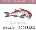 水彩画 透明水彩 ベクトルのイラスト 29963858