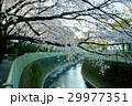 神田川 29977351