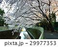 神田川 29977353