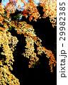 紅葉の風景 29982385
