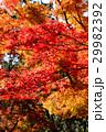 紅葉の風景 29982392