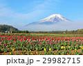 富士山 山 花の写真 29982715