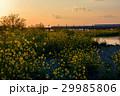 多摩川 高架橋 菜の花の写真 29985806