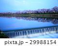 一目千本桜 桜並木 ソメイヨシノの写真 29988154