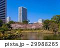 旧芝離宮恩賜庭園 桜 春の写真 29988265
