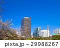 旧芝離宮恩賜庭園 旧芝離宮 桜の写真 29988267