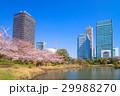 旧芝離宮恩賜庭園 桜 春の写真 29988270